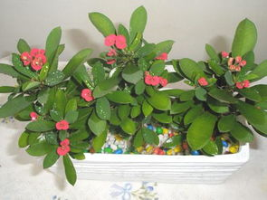 家庭养花如何改良土壤