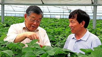 赵亚夫为农民指导草莓种植技术