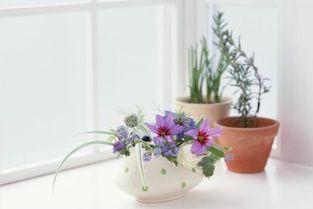 香灰能用来养花吗