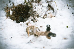 死神的毅力 狙击手卧雪潜伏