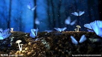 美丽蝴蝶 颜色 幻想 森林 高图片