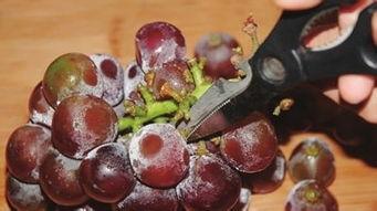 怎么洗葡萄(如何正确洗葡萄)