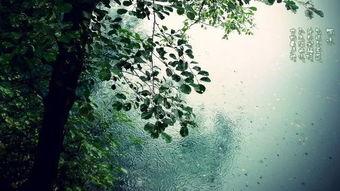 雨水 一夜返青千里麦, 万山润遍动无声