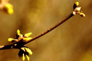 有关春芽的诗词