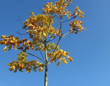 有关秋天花的诗句