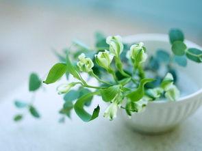 用植物代表生命的四字词