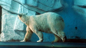 一楼是标本区,展示海洋生物的标本;二楼是互动区,设有许多科学启迪性展品成人票:特价175元这里汇集了北极熊、北极狐、白鲸、海豚、海狮、海豹、海牛、海象、海龟、企鹅等来自世界各地的数百种海洋生物,是一个集观赏性、趣味性、知识性于