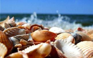贝壳粉能养花