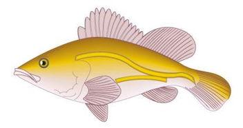 做梦梦到天空有鱼