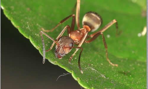 小蚂蚁历险记作文200字