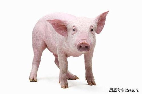2021猪人运程每月运程