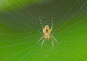 看见死蜘蛛代表什么预兆?