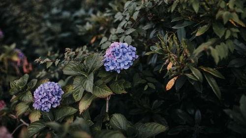 家庭养花过程中虫害