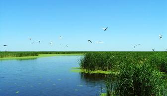 关于湿地和湿地动物的知识
