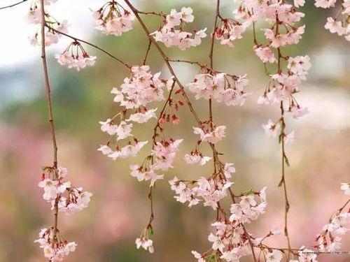 春天关于鲜花的古诗_关于春天的古诗
