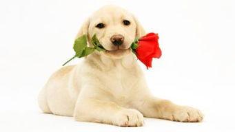 养多少狗一年赚二十万(哪里有正规肉狗养殖加盟)