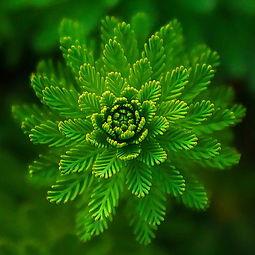 植物创业创新