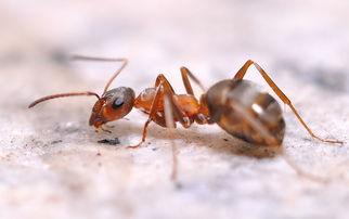 蚂蚁的知识