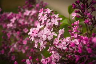 养花是一种雅兴