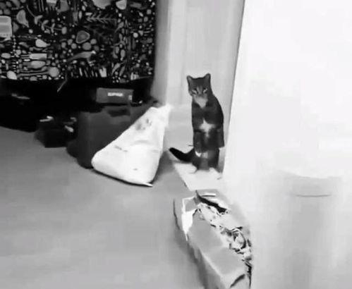 猫咪对柠檬的反应