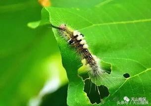 害虫甲虫种类大全大图 图片欣赏中心 急不急图文 Jpjww Com