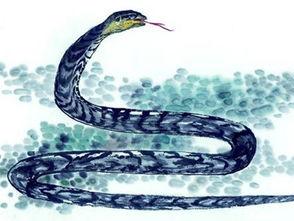属蛇在哪一运程好