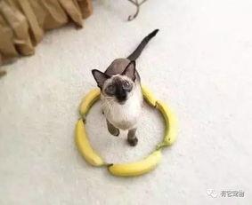 猫圈是个什么东西,真的能封印住猫咪吗