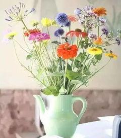 家庭养花是否能放在冰箱上