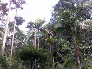 关于热带植物还知道的知识(关于热带雨林,你知道哪些神奇的知识)