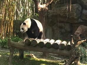 广州长隆大马戏长隆动物世界