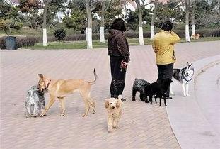 很多人出门遛狗不拴狗链,口口声声说什么我家狗不咬人,恕我直言,出门遛狗都没个意识栓狗,你就不怕狗狗丢