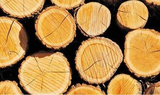 木头榍可以养花吗