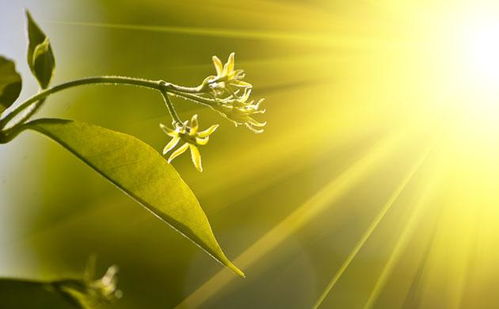 描写太阳的句子(描写太阳的句子)