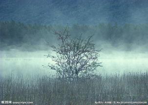 小树林风光图片
