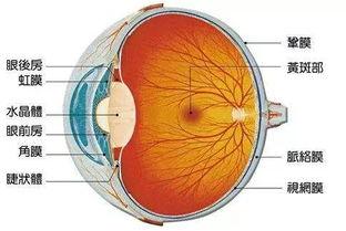 眼睛突然充血 畏光看不清,小心 虹膜睫状体炎 严重可致盲