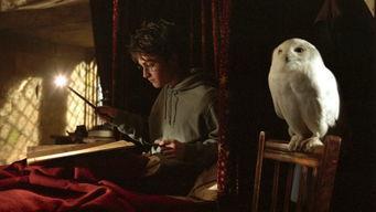 名字的内涵是什么 哈利 波特角色名背后迷人的词源学