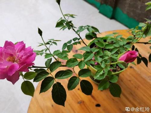 家里养花没有土怎么办