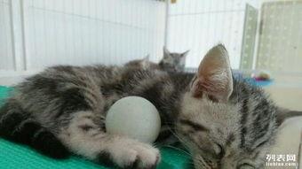 猫咪睡觉的萌