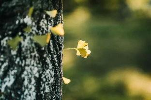 写几句关于落叶的诗句