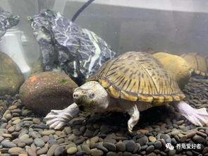 清缸的鱼龟都有哪些