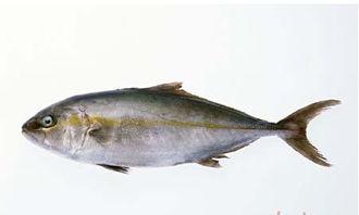 鳕鱼的功效与作用(吃鳕鱼的好处)