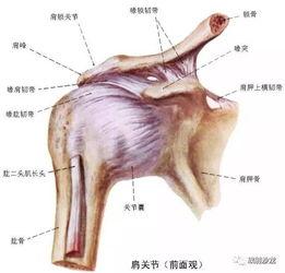 冈上肌肌腱钙化的推拿疗法
