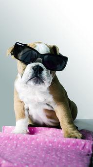 可爱小狗狗高清手机壁纸