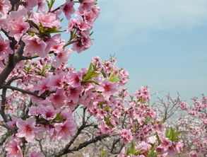 梦到什么桃花运旺盛