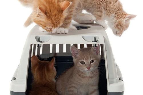 用背包装的猫咪能带上地铁