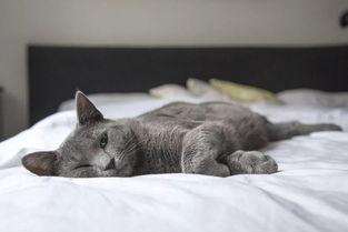 猫咪脖子下面一个软软的包