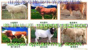 百度吧 百度齐天牛羊驴养殖场吧