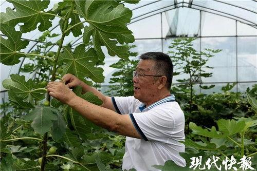 赵亚夫指导农户种植无花果