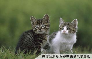猫咪的沙眼症状表现