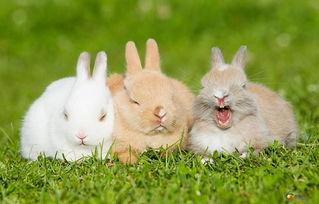 女兔和男鼠属什么生肖最配